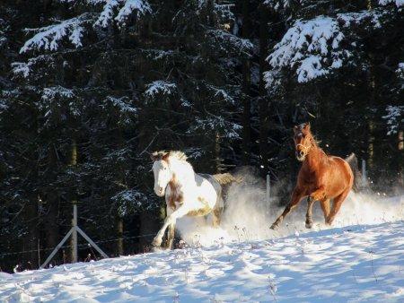 Šumavou na koni